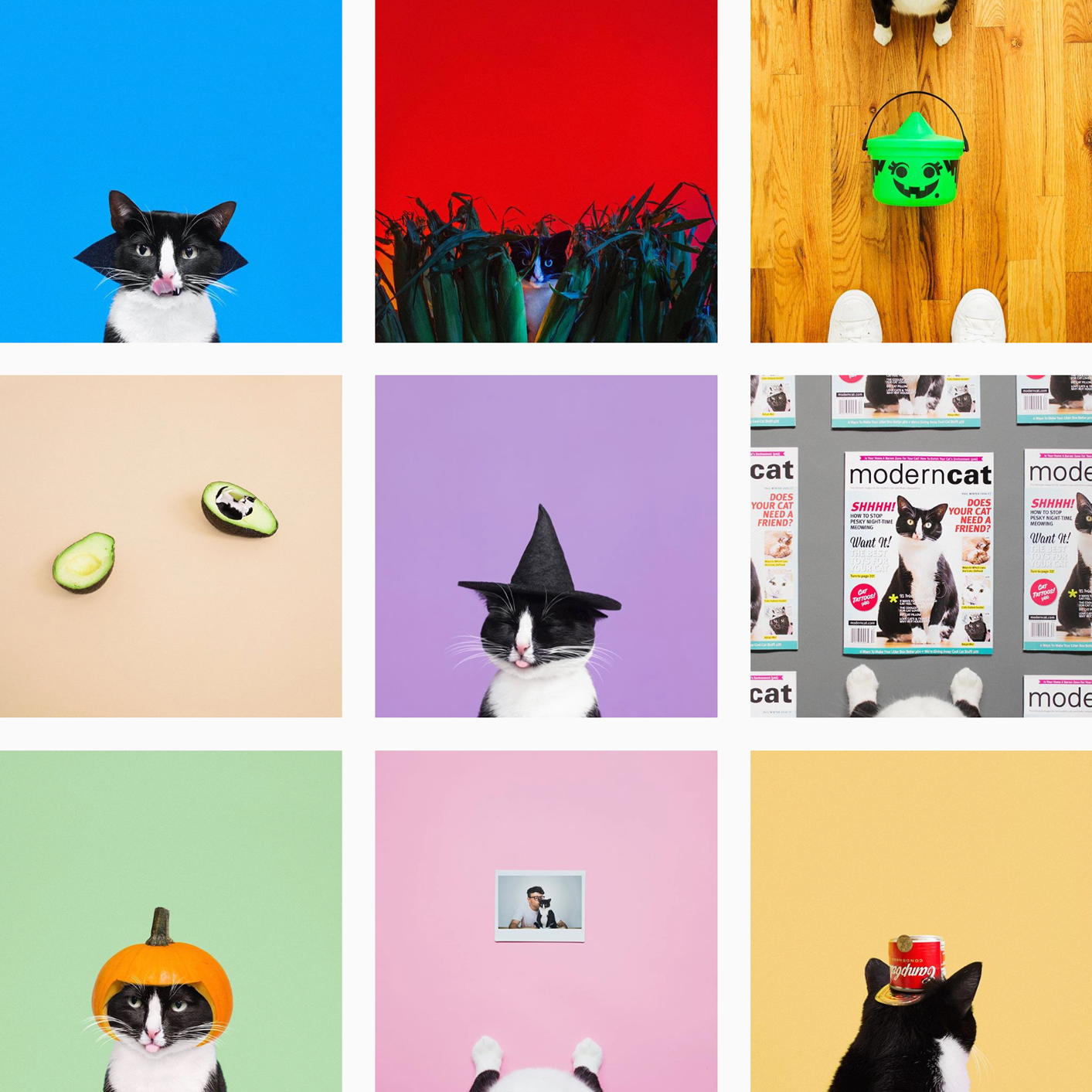 Cats of Instagram - Planoly Blog - princesscheeto